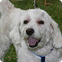 Adopt A Pet :: Charlie - carlsbad, CA