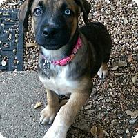 Adopt A Pet :: Tahoe - Bedminster, NJ