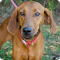 Adopt A Pet :: Christy - Bristol, TN
