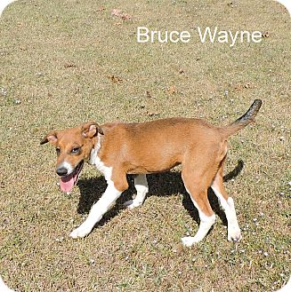 Terrier (Unknown Type, Medium) Mix Puppy for adoption in Slidell, Louisiana - Bruce Wayne