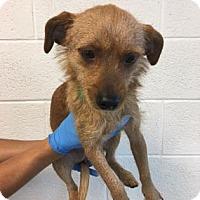 Adopt A Pet :: Jordie - Miami, FL
