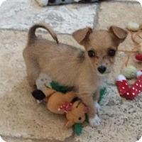 Adopt A Pet :: Manny - Las Vegas, NV