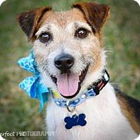 Adopt A Pet :: Rhett - Miami, FL