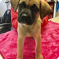 Adopt A Pet :: Vienna - available 1/21 - Sparta, NJ