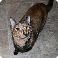 Adopt A Pet :: Tori - O'Fallon, MO