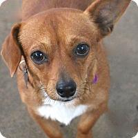 Adopt A Pet :: Tuck - Woonsocket, RI
