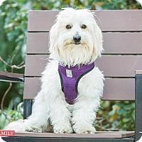 Adopt A Pet :: Clarence - Thousand Oaks, CA