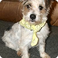 Adopt A Pet :: Dartanion - Pilot Point, TX