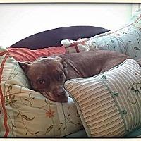 Adopt A Pet :: Sally - Williamsburg, VA
