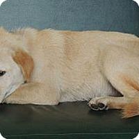 Adopt A Pet :: Ben - Houston, TX