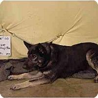Adopt A Pet :: Cloe/Pending - Zanesville, OH