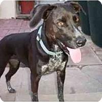 Adopt A Pet :: Paige - Scottsdale, AZ