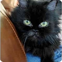 Adopt A Pet :: Stella - Columbus, OH