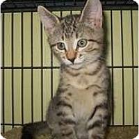 Adopt A Pet :: Jamie - Shelton, WA