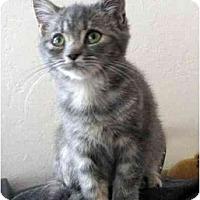 Adopt A Pet :: Gillan - Davis, CA