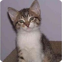 Adopt A Pet :: Esme - Montgomery, IL