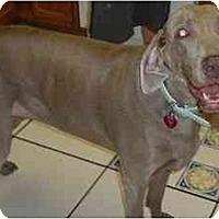 Adopt A Pet :: Mysti - Eustis, FL