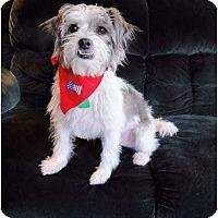Adopt A Pet :: Grady - Mooy, AL