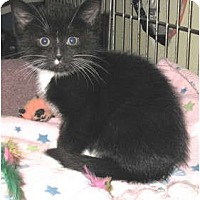 Adopt A Pet :: Flyod - Acme, PA