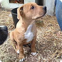Adopt A Pet :: Tawny - Gig Harbor, WA