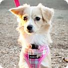 Adopt A Pet :: Moosey