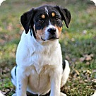 Adopt A Pet :: PUPPY BETSY