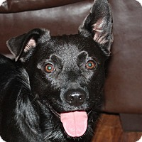 Adopt A Pet :: Shadow - PENDING, in Maine - kennebunkport, ME