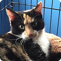 Adopt A Pet :: Violet - Willingboro, NJ