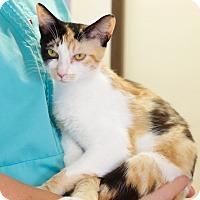 Adopt A Pet :: Sunny - Homewood, AL