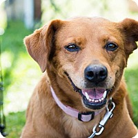 Adopt A Pet :: Casey - West Bend, WI