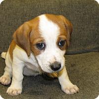 Adopt A Pet :: Dovey - Groton, MA