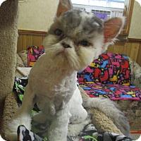 Adopt A Pet :: Hercules - Witter, AR