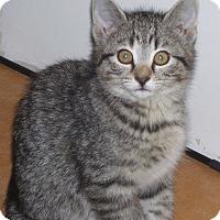 Adopt A Pet :: Sierra - Colorado Springs, CO