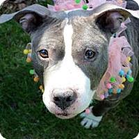 Adopt A Pet :: Wanda - Framingham, MA