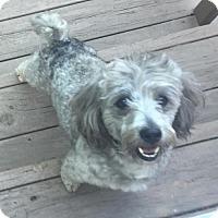 Adopt A Pet :: Stosh - Clarkston, MI