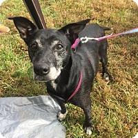 Adopt A Pet :: Jackie Brown - Wichita, KS