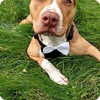 Adopt A Pet :: Reggie - Glocester, RI