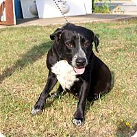 Adopt A Pet :: Stella - Oakdale, LA