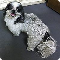 Adopt A Pet :: Poco - Tavares, FL
