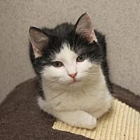 Adopt A Pet :: Selena - Naperville, IL