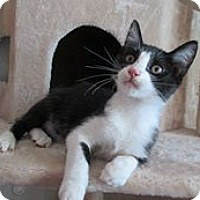 Adopt A Pet :: Fisher - San Bernardino, CA