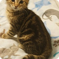 Adopt A Pet :: Tyson - Stafford, VA