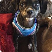 Adopt A Pet :: Carrie - San Diego, CA