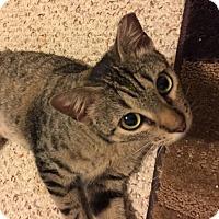 Adopt A Pet :: Jocelyn - Houston, TX