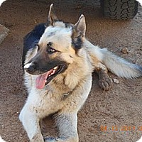 Adopt A Pet :: Charlie - Victorville, CA