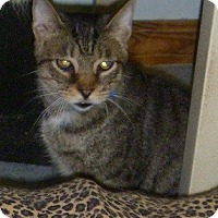 Adopt A Pet :: Samuel - Hamburg, NY