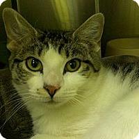 Adopt A Pet :: Celine Dion - Richboro, PA