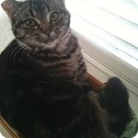 Adopt A Pet :: Angelina - Justin, TX
