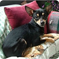 Adopt A Pet :: Poppy - Dallas, TX