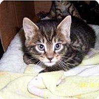 Adopt A Pet :: Victoria & Brian - Island Park, NY